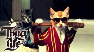 GATOS Thug Life 2016. Los vídeos más chistosos de gatos. Los más divertidos!