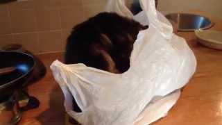Cat stuck in plastic bag tragedy