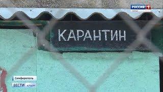 В Крыму резко увеличилось число заболевших бешенством животных
