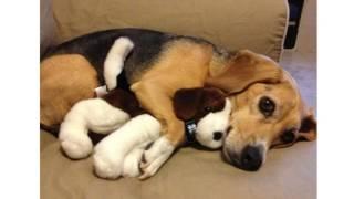Что делать, если собака «усыновила» мягкую игрушку?