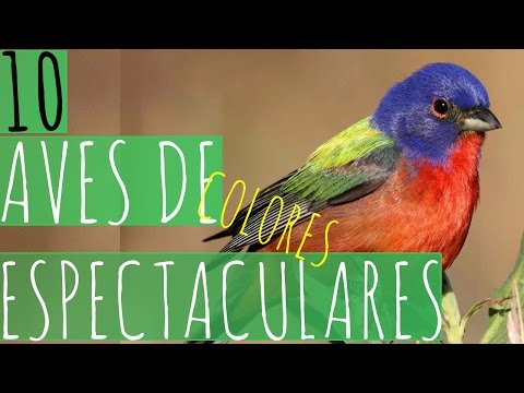 10 AVES DE COLORES ESPECTACULARES
