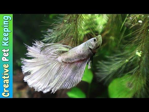 5.5 Gallon Betta Fish Tank -- Simple Low Light Aquascape