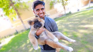 I GOT A NEW PUPPY *MOST EXPENSIVE DOG* !!!