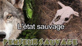 Est-ce naturel d'être sauvage ? | L'état sauvage - Animaux CH.2 EP.08