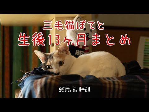 三毛猫ぽてと・生後13ヶ月まとめ動画