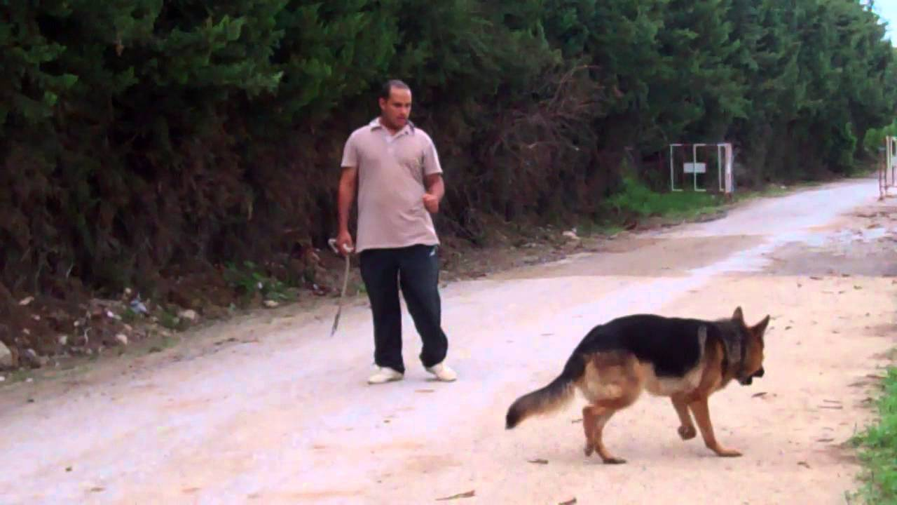 dressage chien 43