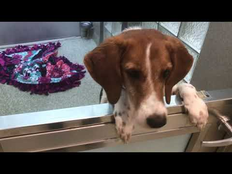 Elizabethany - Meet Snoopy, a hound that needs a home!