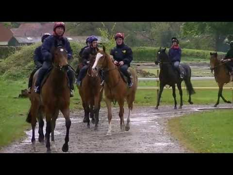 Tim Easterby Stable Visit - On The Gallops