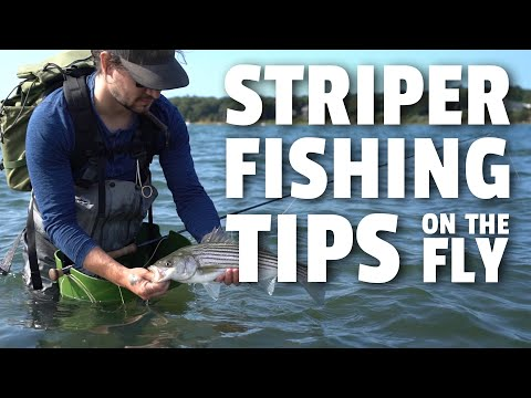Striper Fishing Tips With A Fly Rod