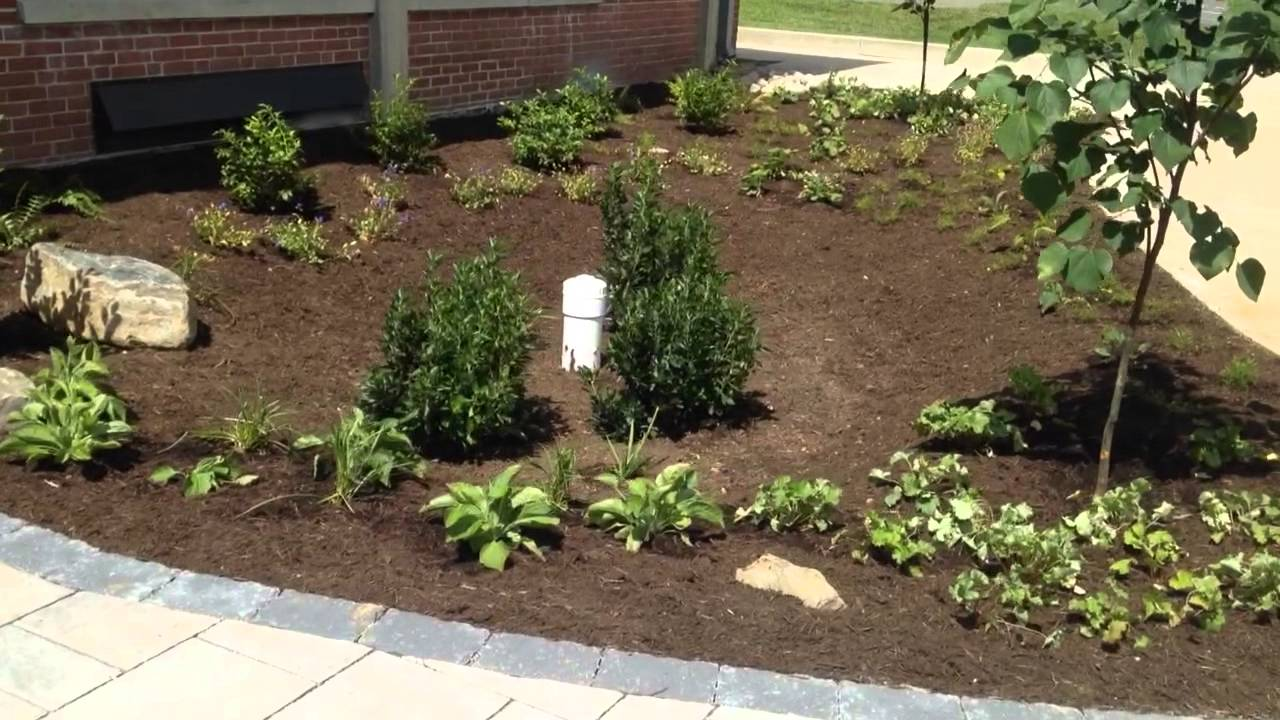 Rain garden installation with native plants, cecil county md - YouTube