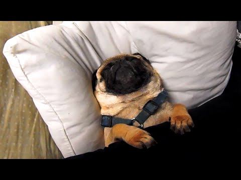 Let It Snore, Let It Snore, Let It Snore!