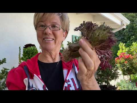 Tower Garden Refresh OR Jill Uses a Drill!