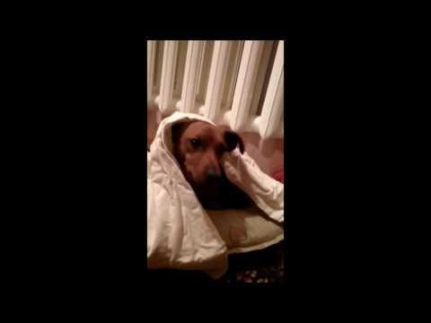 Smart dog is going to sleep