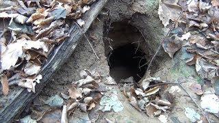Лесные поиски с Белым Копателем, исследуем сеть крупных оврагов!