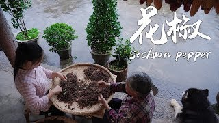 Sichuan pepper, the soul mate of numbing and spicy dishes