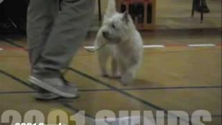 2001 DTK Sunds - Zalazar Yahoo
