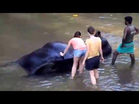 Washing of the elephant / Kupanie slona