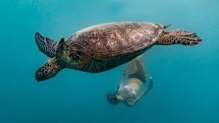 swimming-with-sea-turtles-rarotonga-cook-islands