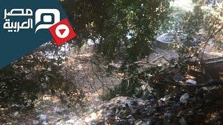 مصر العربية   القمامة تقتحم كورنيش الزمالك