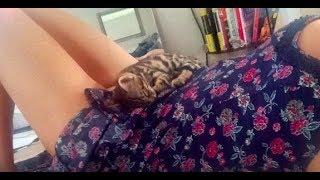 My New Kitten Passed Away