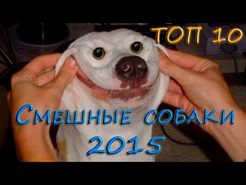 DOGPRIKOLI - YouTube