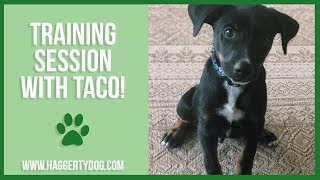 Training Session with TACO!