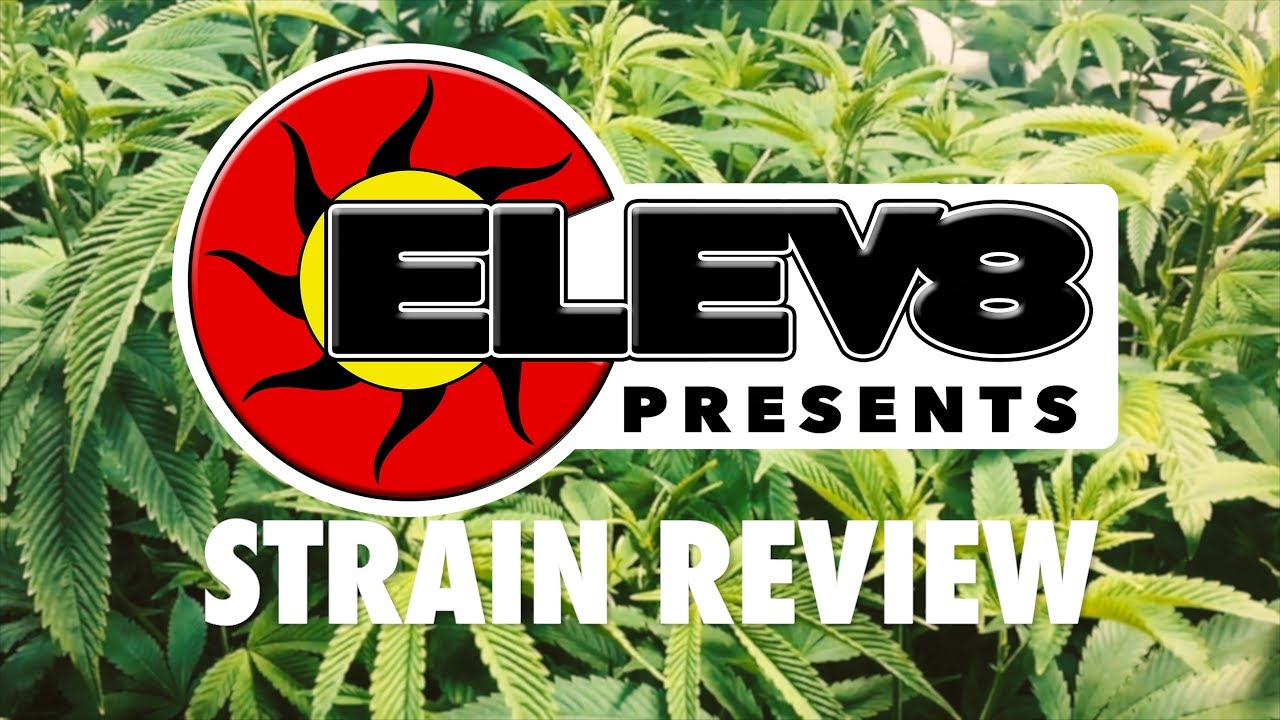 Strain Review: Lake of Fire - ELEV8 Presents