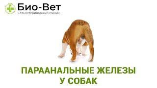 Параанальные железы у собак. Ветеринарная клиника Био-Вет.