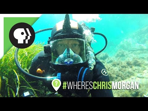 Wrangling the Ocellated Wrasse | #WheresChrisMorgan