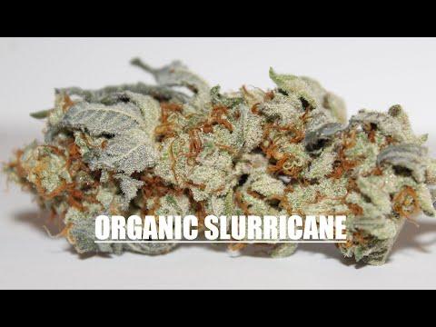 Organic SLURRICANE Strain Review (Inhouse Genetics) | Strongest Cannabis Strain?