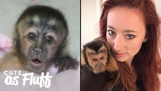 My Therapy Monkey Saved My Life | CUTE AS FLUFF
