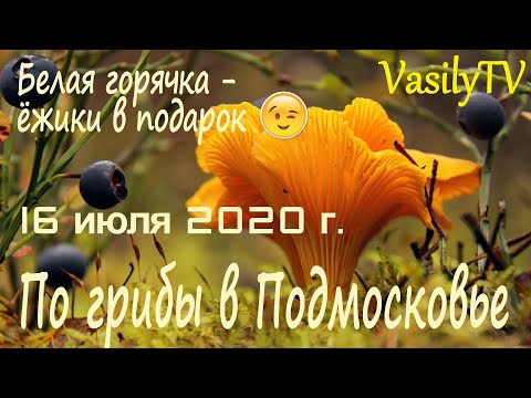 По грибы в Подмосковье 16 июля 2020 г. Белая горячка – ёжики в подарок��