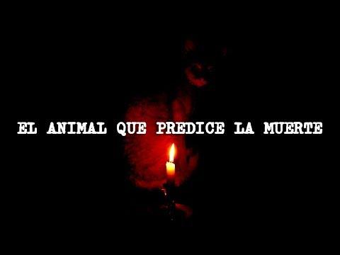 El animal que predice la muerte (REAL)
