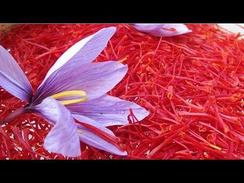 Nhụy Hoa Nghệ Tây Saffron có tác dụng gì ? Cách uống nhụy hoa nghệ tây