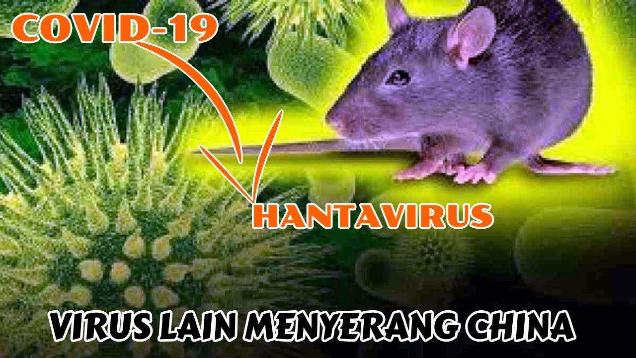 Belum Selesai Memberantas Pandemi Covid-19 China Diserang Oleh ...