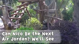 Can Nico Be the Next Air Jordan? We'll See | iPanda