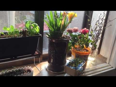 Garden Window in Lewisville