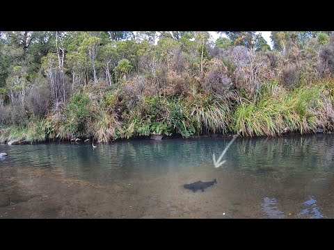 Catching HUGE Trout In New Zealand. Pt 2