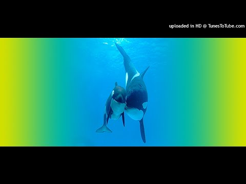 Silent Harmony - Save The Whales (Sonic Experience Mix)