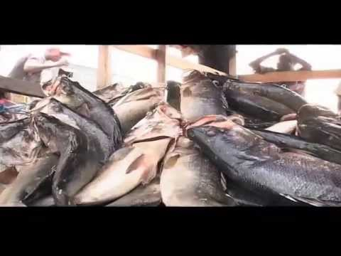 Aquaculture Documentary By The Ministry Of Agriculture, Livestock And Fisheries In Kenya