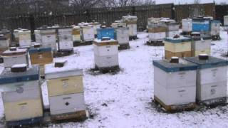 Пчеловодство(зимовка 21 января 2016 год)(состояние пчелиного клуба зимой., 2016-01-21T13:34:08.000Z)