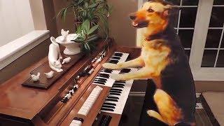 Dog Fails 🐶 Funny Dogs 2017 [Funny Pets]