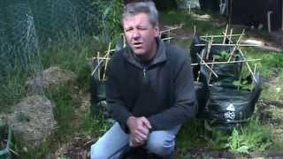 Phil's Gardening Tips And Tricks The Potato Experiment Fifth Update Potatoes Exploded In Compost