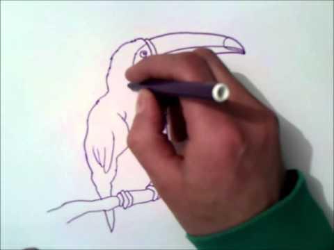 Como Dibujar Un Tucan Como Dibujar Un Tucan Paso A Paso