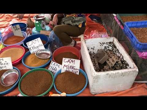 Trang Trại Dế Thanh Xuân Bán Buôn Dế Sống Cho Các Chợ Chim Toàn Quốc