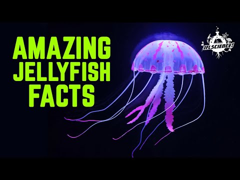 Weird And Wonderful Jellyfish Facts