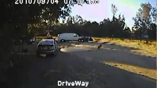 Rottweiler Rescues Chihuahua From Coyote!!