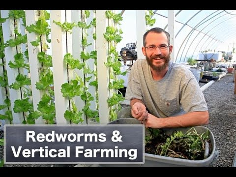 Redworms and Aquaponics: Can it be done?