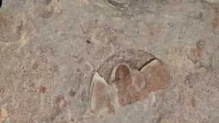 Trilobite Fossil Hunting