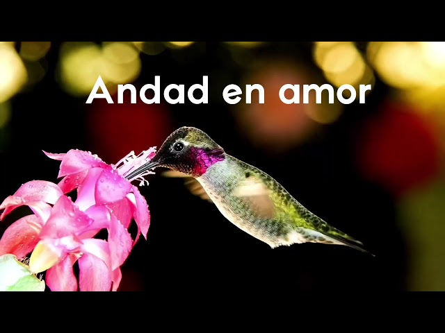 Andad en amor